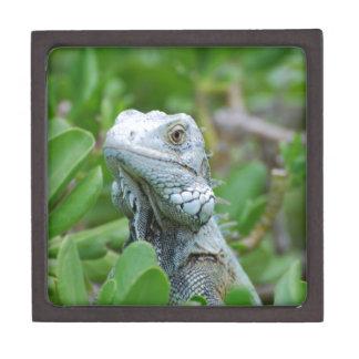 Peek-a-boo Iguana Jewelry Box