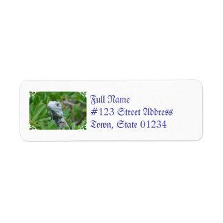 Peek-a-boo Iguana Label