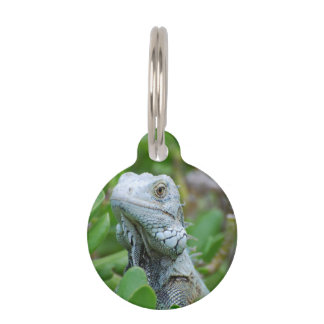 Peek-a-boo Iguana Pet ID Tag