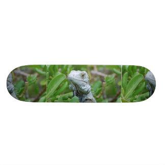 Peek-a-boo Iguana Skateboard Deck