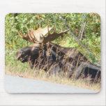 Peek-a-Boo Moose Mousepad