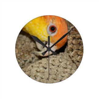 Peek-a-Boo Parrot Caique Round Clocks