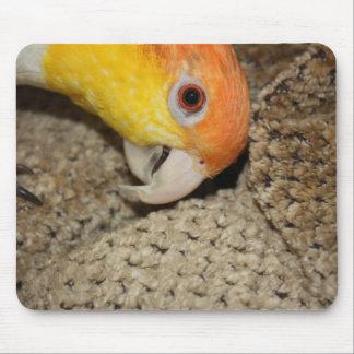 Peek-a-Boo Parrot Caique Mouse Pad