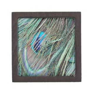 Peek a Boo Peacock Feathers Gift Box