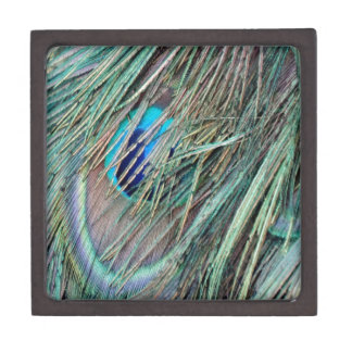 Peek a Boo Peacock Feathers Gift Box