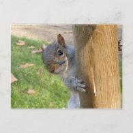 Peek-a-Boo! Post Cards