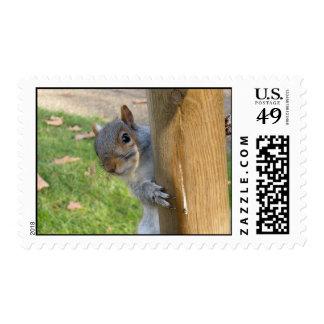 Peek-a-Boo! Postage