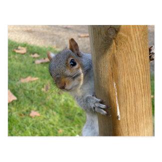 Peek-a-Boo! Postcard