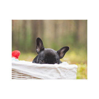Peek-A-Boo Puppy Gallery Wrapped Canvas