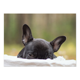 Peek-A-Boo Puppy 5.5x7.5 Paper Invitation Card