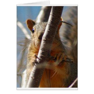 Peek- a- boo squirrel greeting card