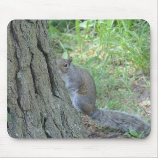 Peek A Boo Squirrel - Mouse Pad