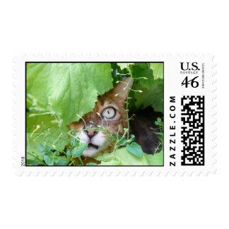 Peek a Boo Stamp