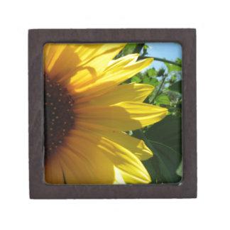 Peek A Boo Sunflower Gift Box