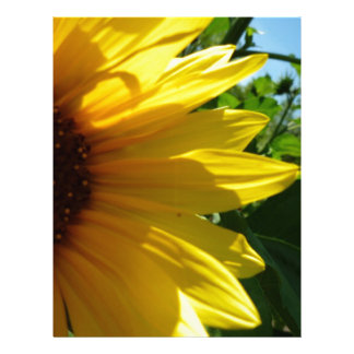 Peek A Boo Sunflower Letterhead