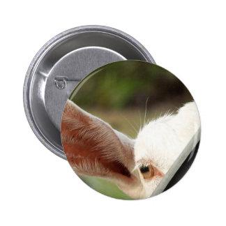 Peek a boo white goat Cute goat waiting picture Pinback Button