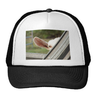 Peek a boo white goat! Cute goat waiting picture Trucker Hats
