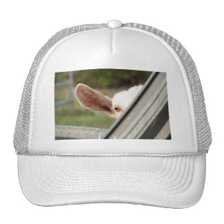 Peek a boo white goat! Cute goat waiting picture Mesh Hats