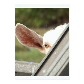 Peek a boo white goat! Cute goat waiting picture Personalized Invites