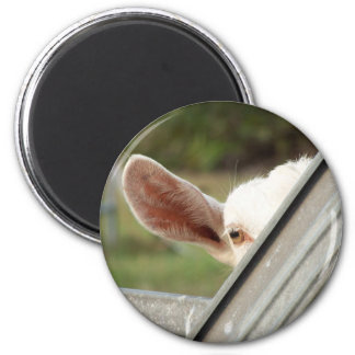 Peek a boo white goat! Cute goat waiting picture 2 Inch Round Magnet