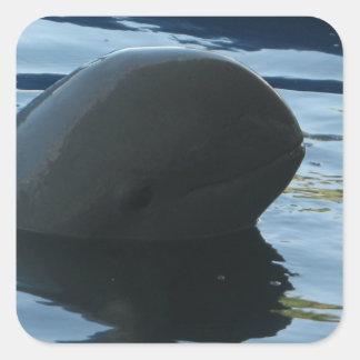 Peekaboo del delfín de Irrawaddy Calcomanías Cuadradass Personalizadas