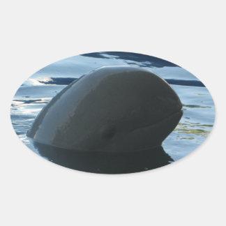 Peekaboo del delfín de Irrawaddy Pegatina Óval Personalizadas