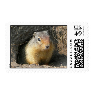 Peekaboo! Ground Squirrel Postage Stamp