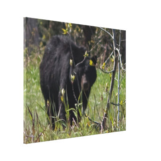 Peeking Bear Stretched Canvas Prints