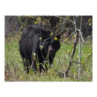 Peeking Bear Photo Print