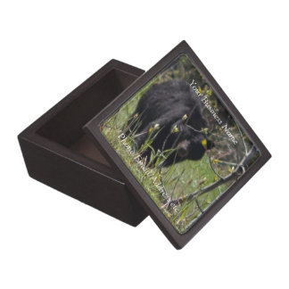 Peeking Bear; Promotional Keepsake Box