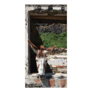 Peeking donkey photo card