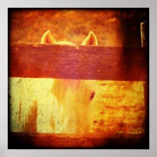 Peeking Horse Print