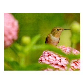Peeking Hummingbird Postcard
