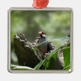 Peeking Java Sparrow Metal Ornament