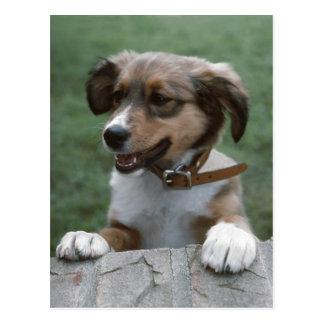 Peeking Puppy Postcard