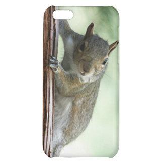 Peeking Squirrel i iPhone 5C Case