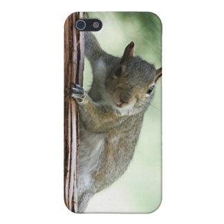 Peeking Squirrel i iPhone SE/5/5s Case