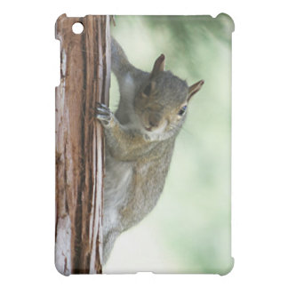 Peeking Squirrel  iPad Mini Cover