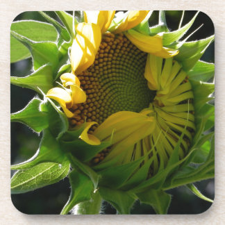 Peeking Sunflower Coaster