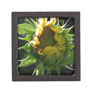 Peeking Sunflower Gift Box