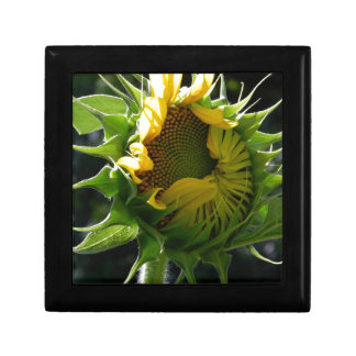 Peeking Sunflower Jewelry Box