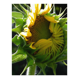 Peeking Sunflower Letterhead