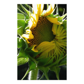 Peeking Sunflower Stationery