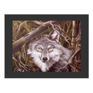 Peeking Wolf Postcard