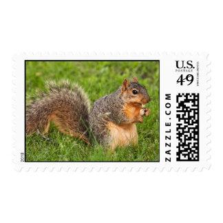 Peel Open Package Stamp
