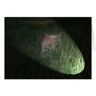 Peeping Tom Cat Cards