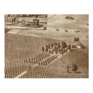 Peerless Vineyard, Hanford, Cal Postcard