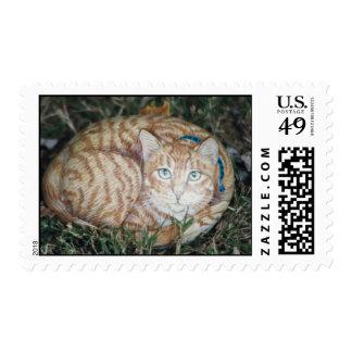 """Peewee"" cat rock stamp"