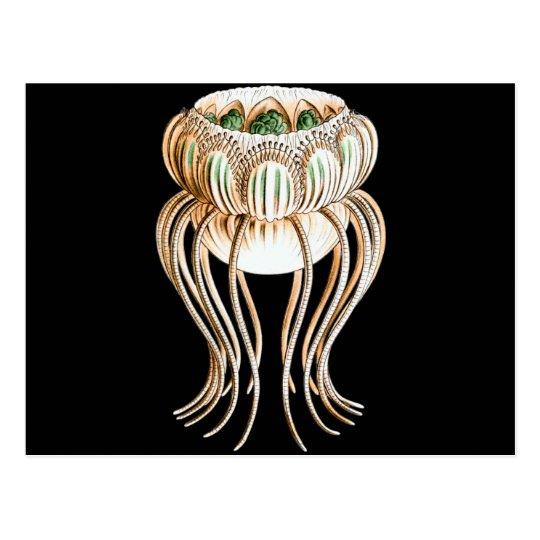 Pegantha (Jellyfish) Postcard