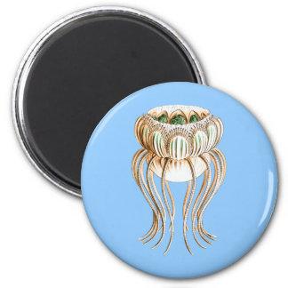 Pegantha (medusas) imán redondo 5 cm
